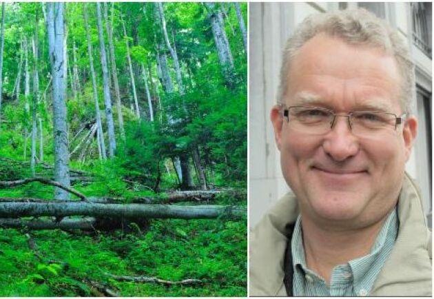 – Det är svårt att köpa skog, inte bara i Rumänien utan på många håll i världen. Det finns osäkerheter kring ägande och gränser, kartor och dokumentation saknas, säger Lennart Ackzell.