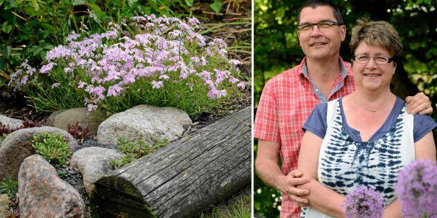 Plantera ett vackert stenparti – inspireras av Ingela och Mikael