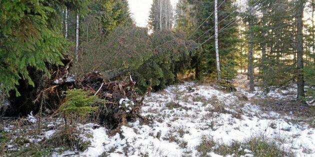Efter stormen: Vattenfall spränger bort träd