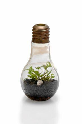 Liten men väldigt ljus idé. Titta noga. I planteringen bor en liten, liten kanin. Foto: Istock.