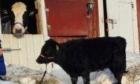 Nu har Hilda fått godkänt sällskap på gården
