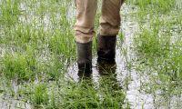 Skånebönder slipper krav på grön mark