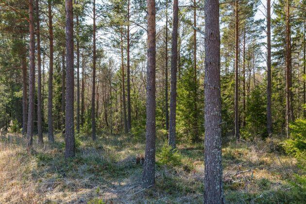 Denna ytterst välarronderade skogsegendom består av 2 138 hektar, varav 1 562 hektar utgör produktiv skogsmark.