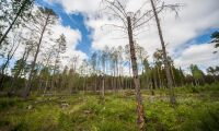 """""""Skogsutredningen löser inte konflikten i skogen"""""""
