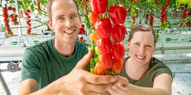 Deras smak för tomater blev en fullträff