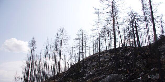 Stora Enso vann i brandrättegång