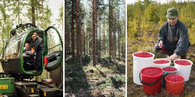 Så vill Sveaskog visa på skogens värde