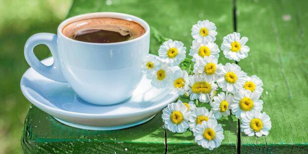 Forskning: Därför ska du ta (ännu) en påtår kaffe – för hälsans skull