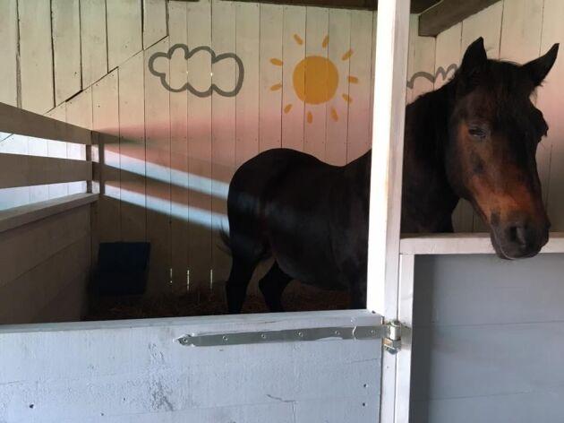 Nu är ridskolan nedlagd och hästarna sålda.