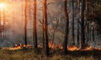 Ekshärad: Skogsbranden blossade upp igen