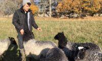 Ett pris blev två i Årets fårföretagare