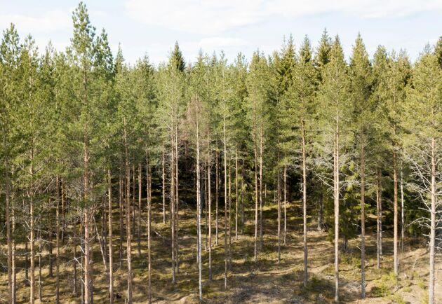 Den skyddade skogsmarken har blivit något större i Sverige det senaste året. Arkivbild.