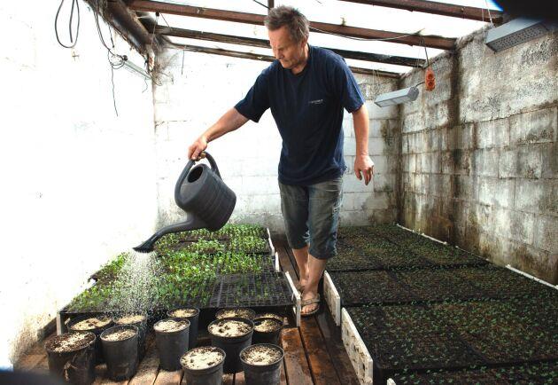 För hand vattnar Olle Göransson de plantor av blomkål och broccoli som ska sättas ut på friland.