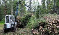 Så tungt väger jord och skog i bioekonomin
