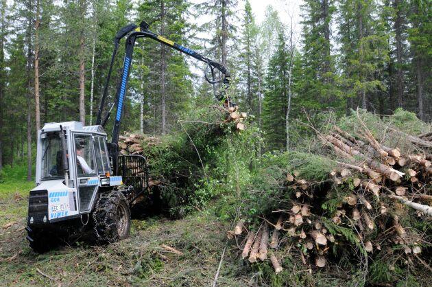 Skogsbrukets andel av den svenska bioekonomin är 14 procent, enligt de nya uppgifterna från SCB.