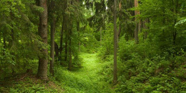 Grönt är skönt – så botar träden din stress