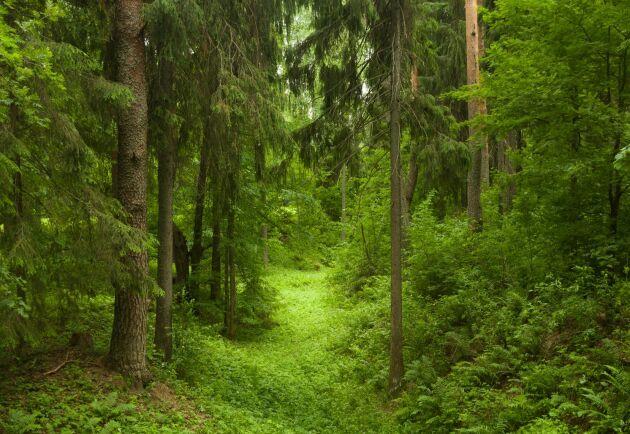 Forskare har upptäckt att stressnivåerna sjunker ju grönare och frodigare träden är.