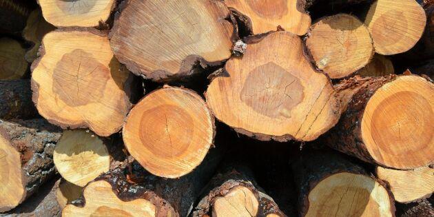 Från idé till handling i skogsriket Småland