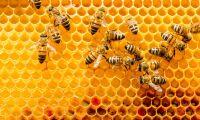 Stulna bin har blivit återfunna