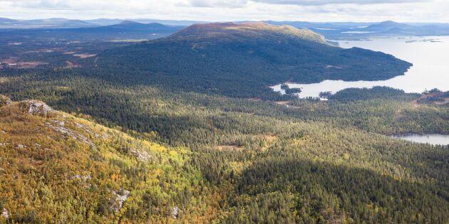 Höga naturvärden i fjällnära skog