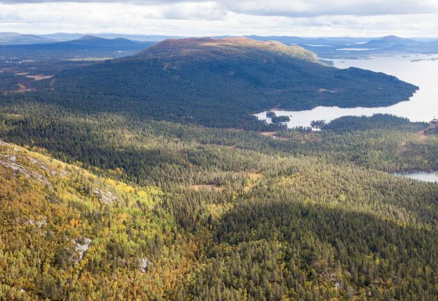 Längs fjällkedjan finns över 500 000 hektar produktiv skog med höga naturvärden. Bild från Iksjak, ett stort sammanhängande naturskogsområde strax norr om Arjeplog.