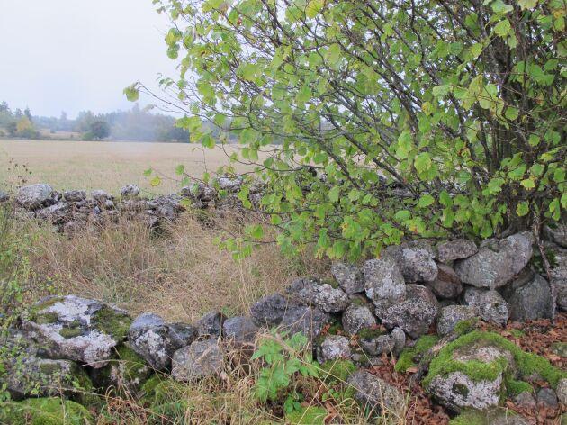 Biotopskydd på Öland.