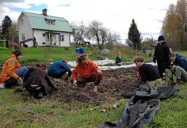 Här kan alla hitta på något att göra – gräva, hugga ved, bygga växthus, laga mat, skratta och ha kul. Hemma hos Henrik är umgänge viktigast.