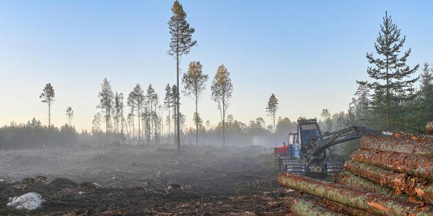 20 år sedan skogen fick egen tidning – skulle öka intresset för skogsbruk