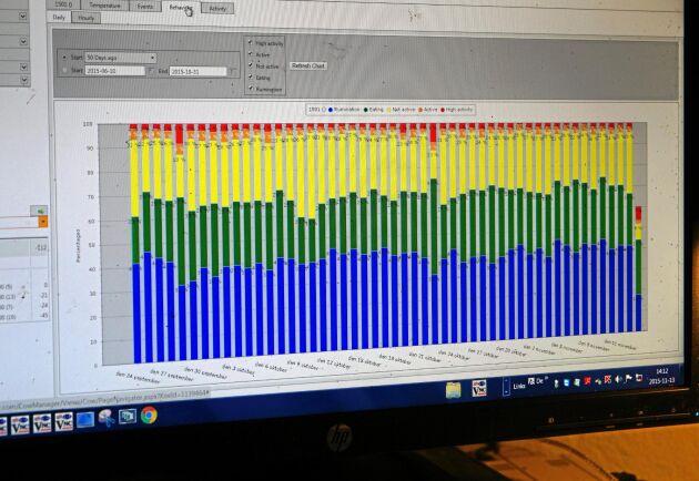 Cow Manager visar blått när kon idisslar, grönt när hon äter och rött när hon mycket aktiv.