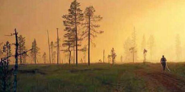 Nu kan branddrabbade skogsägare söka stöd