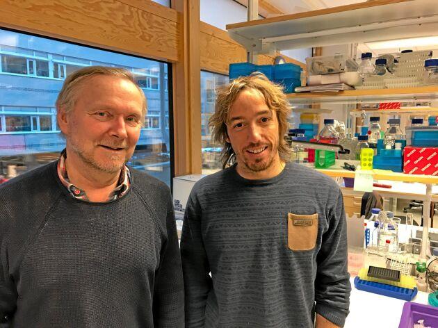 Professor Jan Stenlid och Jonàs Oliva, forskare vid SLU.