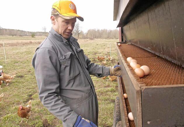 Daniel Hägerby förväntar sig en dubblering av äggproduktionen i sommar.