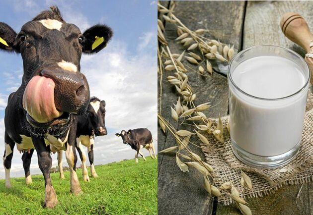 Komjölken har fått konkurrens av vegetabiliska uppstickare.