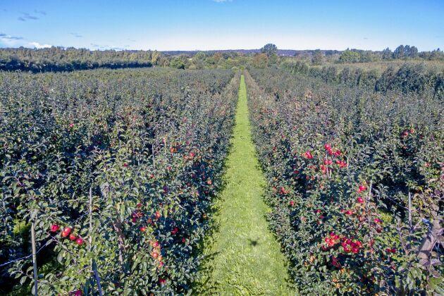 Fastigheten omfattar 30,7 ha åkermark med stödrätter varav 29 ha upptas av frukt- och bärodling.