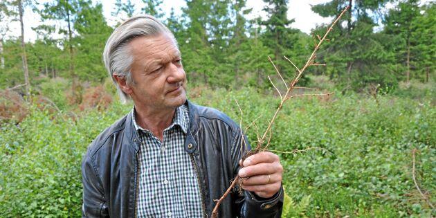 Torkan tog en tredjedel av hans plantering