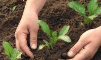 USA-företag satsar på radikal odling