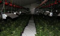 Jättebeslag av cannabis