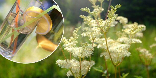 Hemgjord älggrässaft med smak av citron