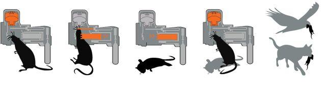 Goodnature A24 är en gasdriven fälla som skjuter ut en kolv för att döda musen eller råttan. Fällan kan sedan vittjas av katter och fåglar.