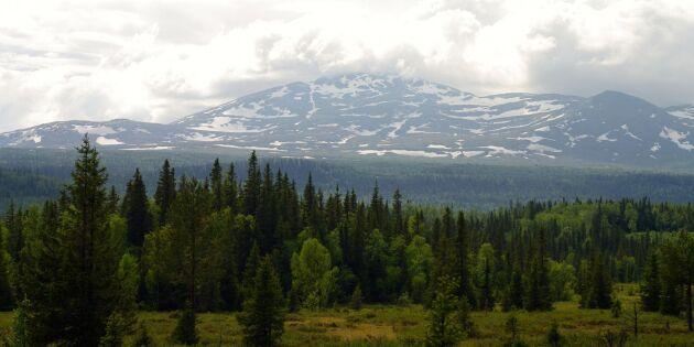 Skogsstyrelsens beslut om fjällnära skog skjuts upp