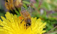 Ekologisk skolmat och bikupor bland Bryssel-förslag