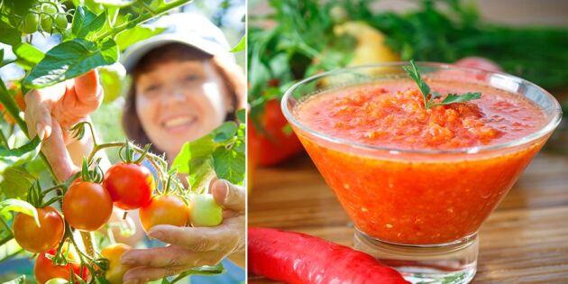 Hjälp vad mycket tomater – 3 tips till dig med stor skörd