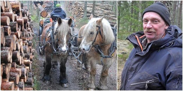 Modernt skogsarbete med äkta hästkrafter