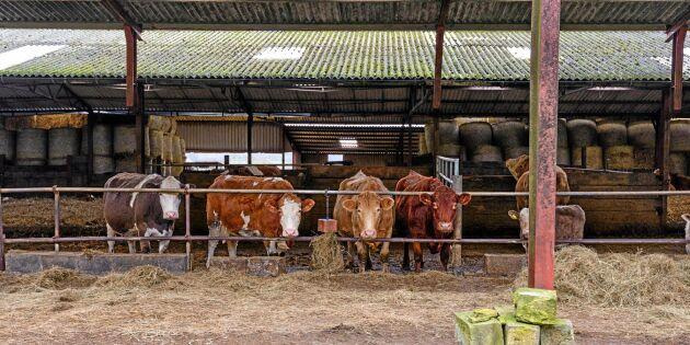 """Storbritannien: """"Djuruppfödare kan inte sova om nätterna"""""""