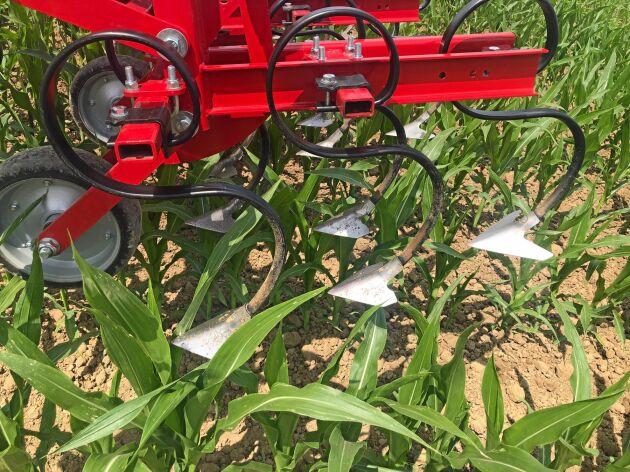 Med en arbetshöjd på 66 centimeter kan maskinen användas i sen bearbetning i majs.