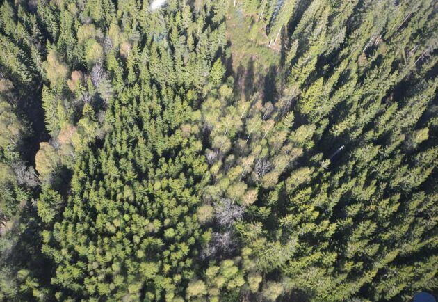 Experter har utsetts till Skogsutredningen, som också har kallats för äganderättsutredningen.