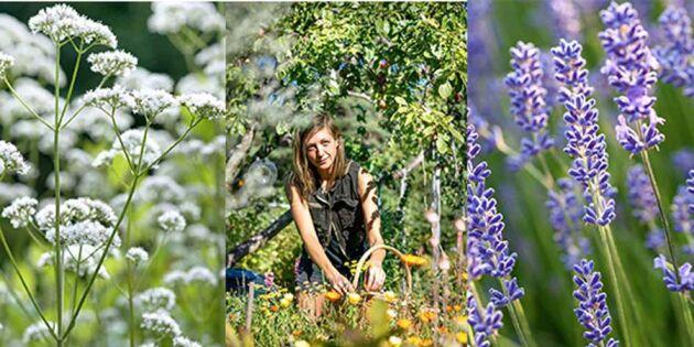 Elin Unnes: Mina blommor är mat, medicin och magi