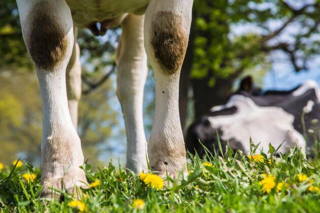 EU-parlamentets tvärpolitiska grupp för djurvälfärdsfrågor vill att den nyinstiftade plattformen för djurvälfärd tar upp bland annat minimistandarder för mjölkkor.