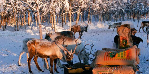 200 ord för snö – lär dig samernas rika språk för snöns olika varianter