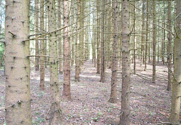 Glöm plantering och röjning i geometriska mönster. Det är viktigare att hitta rätt planteringspunkt än att ha samma avstånd mellan plantorna. Och vid röjning är det inte lönt att röja bort ett av två bra träd bara för att de står nära varandra för att i stället lämna ett sämre träd lite längre bort.